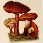 Vintage Brown Mushroom Image