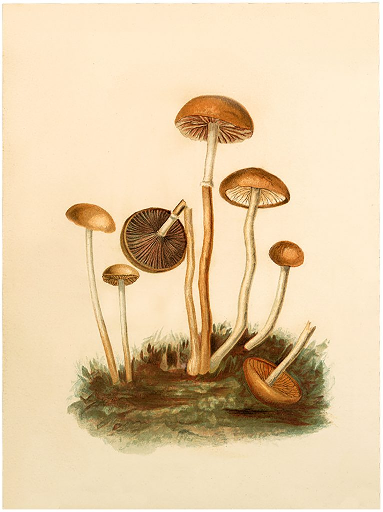 Vintage Fairy Mushrooms Image