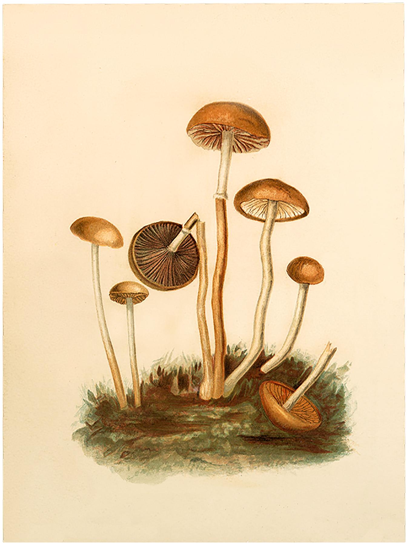 Vintage Fairy Mushrooms Image