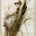 Vintage Lake Birds Image
