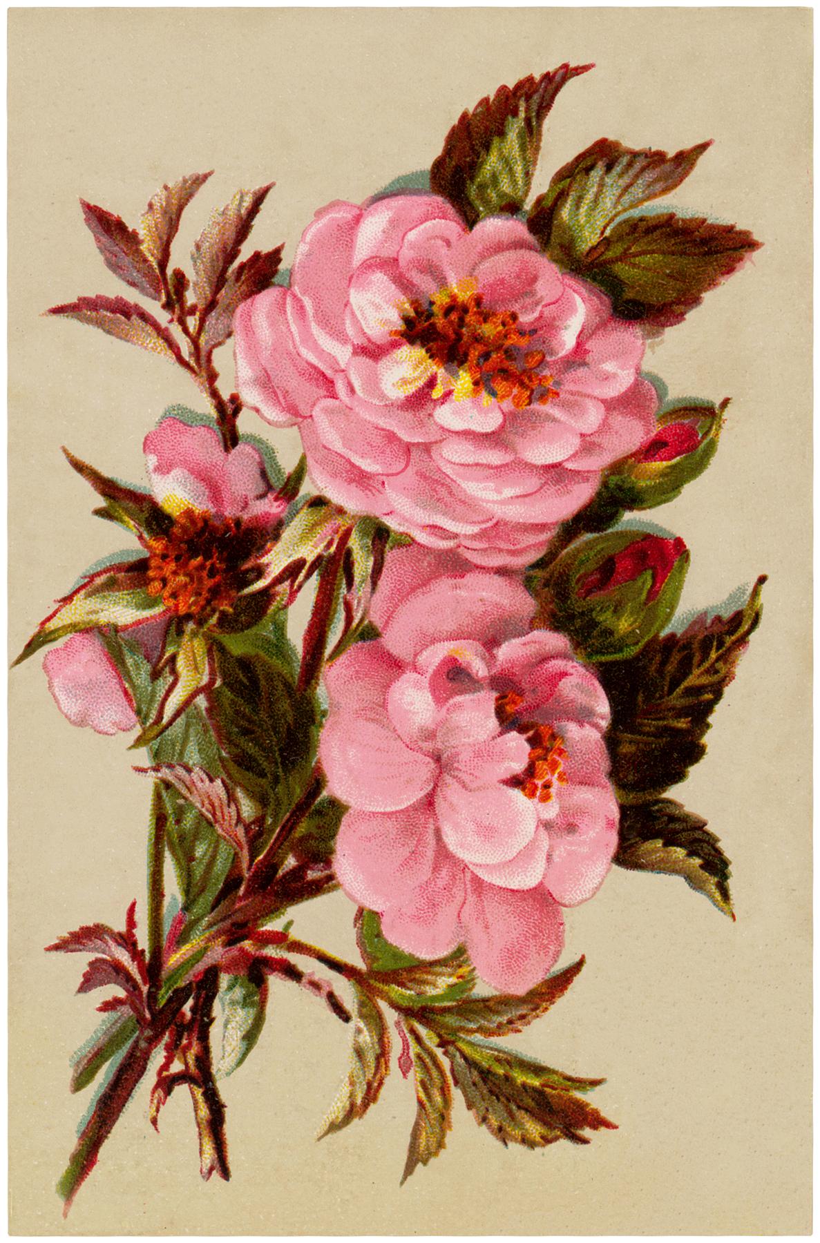 Vintage Pink Roses Image