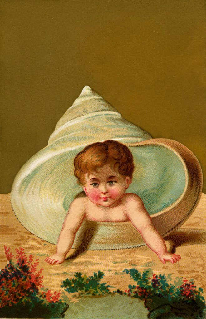 Vintage Shell Baby Image