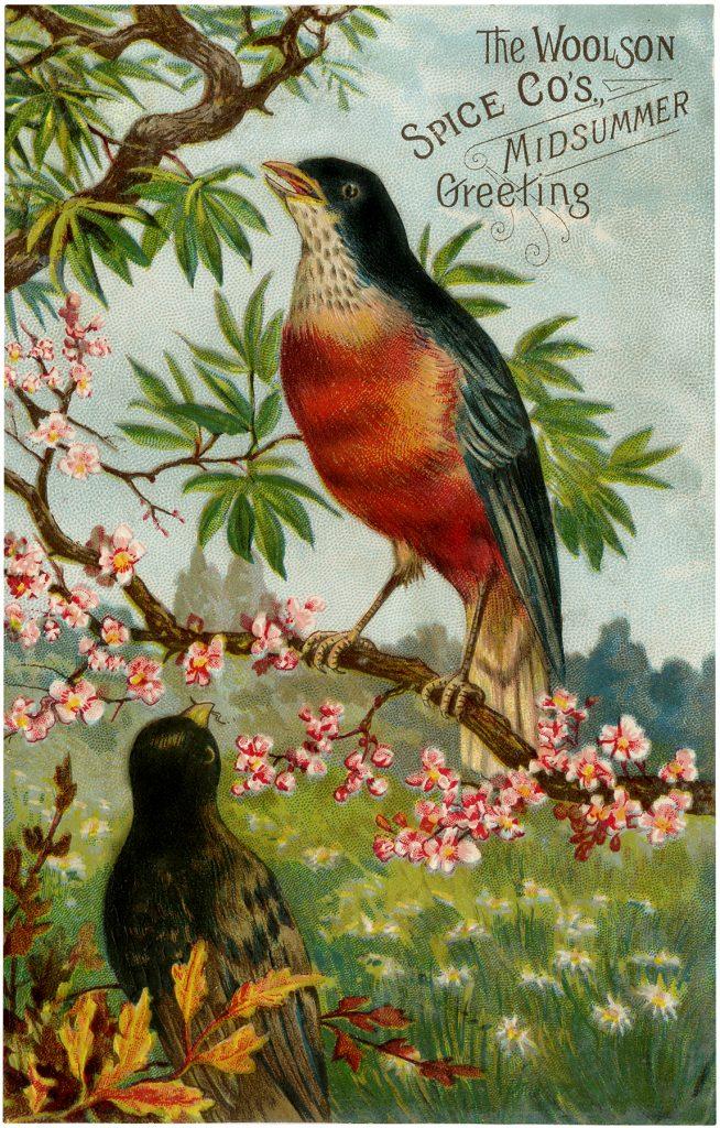 Vintage Advertising Bird Image