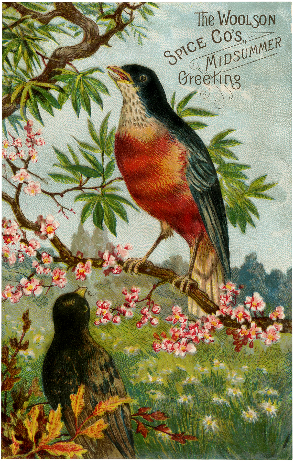 Vintage Advertising Bird Image