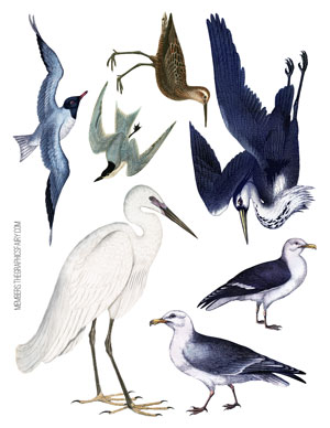 collage_sheet_gulls_graphicsfairy