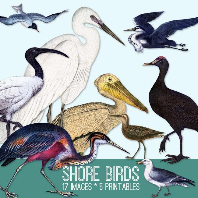 Shore Birds Image Kit