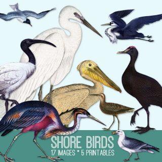 Shore Birds Image Kit! Graphics Fairy Premium Membership