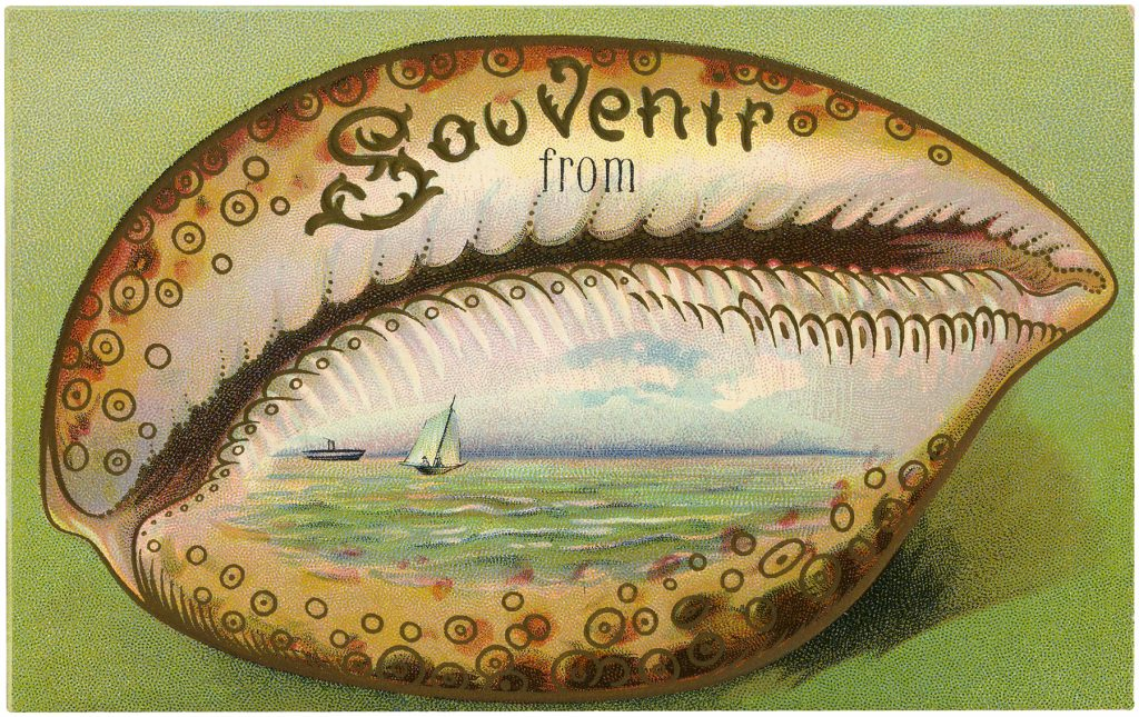 Souvenir Seashell Clipart Postcard