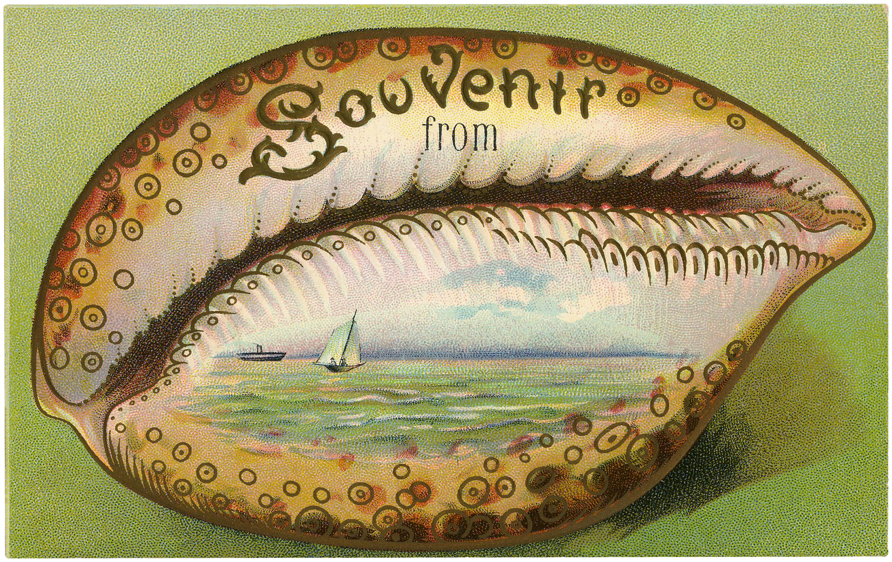 Souvenir Seashell Postcard Download
