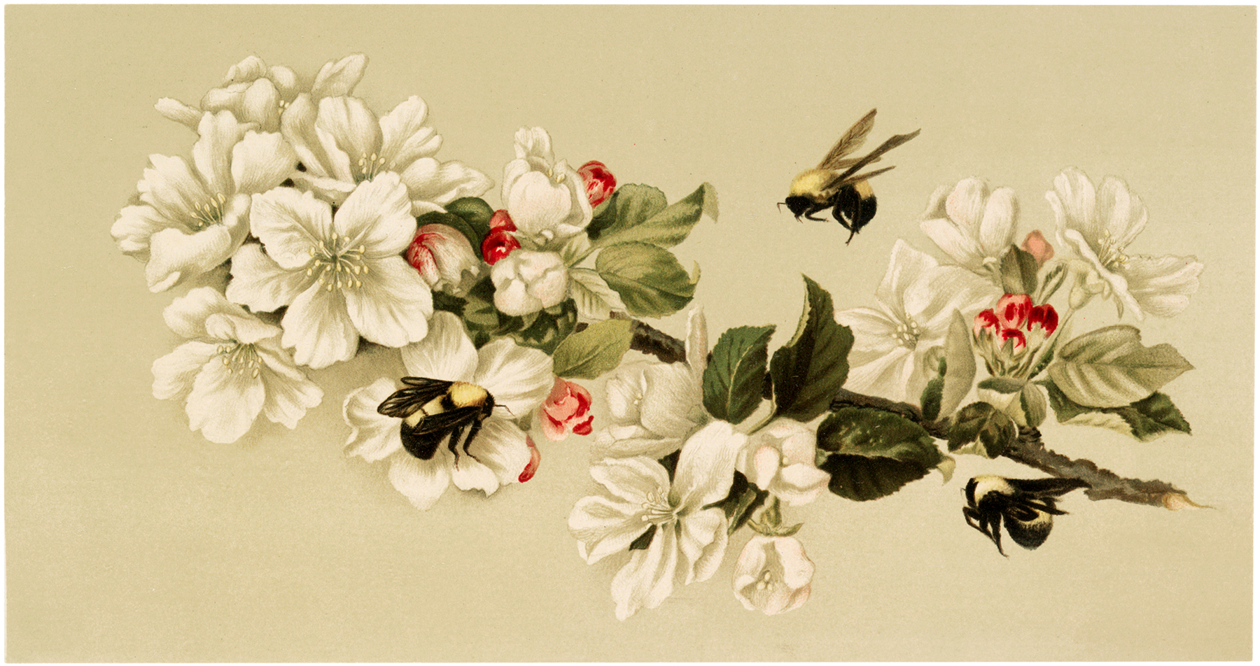 Vintage Bees Blossoms Image