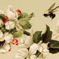 Vintage-Bees-Blossoms-Image-thm-GraphicsFairy