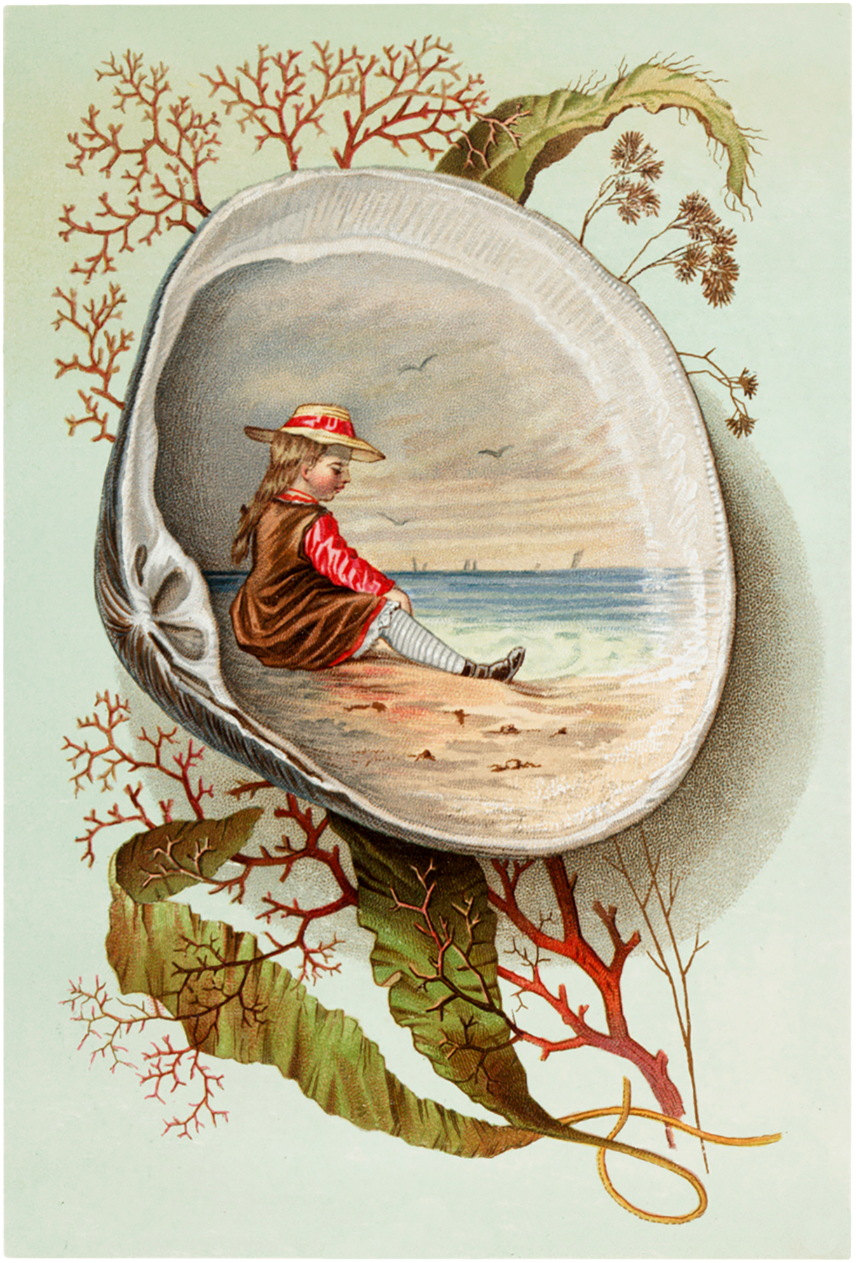 Vintage Clam Shell Scene Image