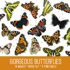 Gorgeous Butterflies Image Kit! – Graphics Fairy Premium