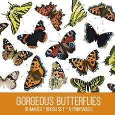 gorgeous_butterflies_650x650_2