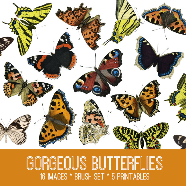 Butterflies Image Kit