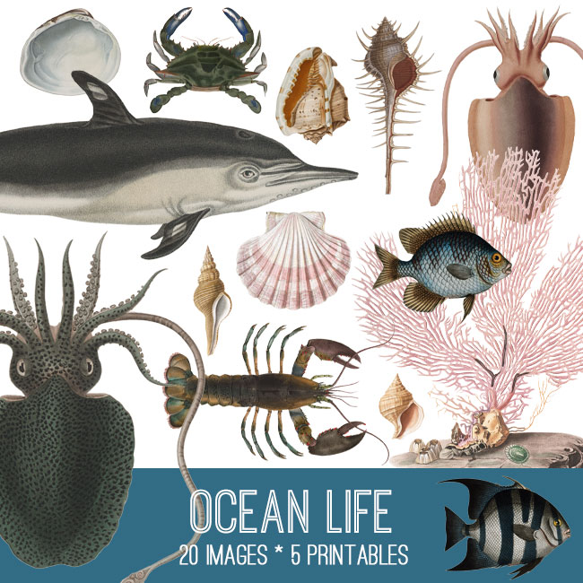 Ocean Life Image Set