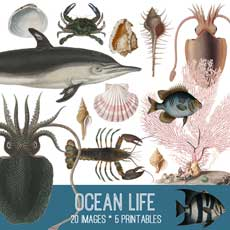 Ocean Life Image Kit! Graphics Fairy Premium
