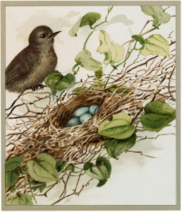 Bird with Blue Eggs Image