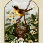 Pretty Yellow Bird Nest Image