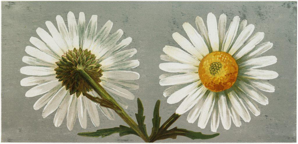 Free Vintage Flower Card
