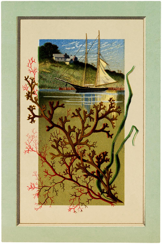 Vintage Sailboat Seaweed Image