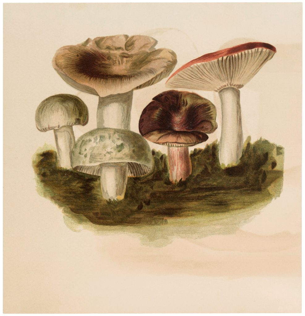 Vintage Mushroom Collection Image