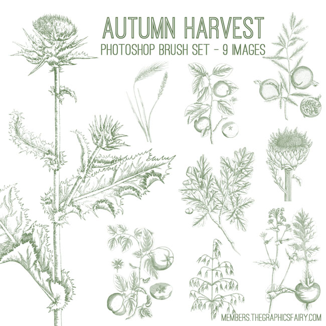 fall_harvest_brushes_graphicsfairy