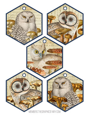 hexagon_owls_mushrooms_graphicsfairy