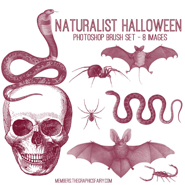 naturalist_halloween_brushes_graphicsfairy