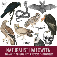 Naturalist Halloween Image Kit! – Premium Membership Site