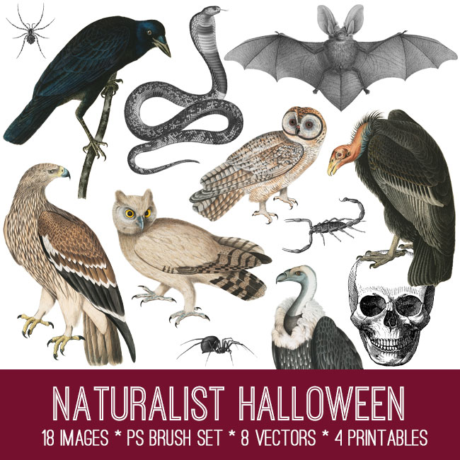 Naturalist Halloween Image Kit
