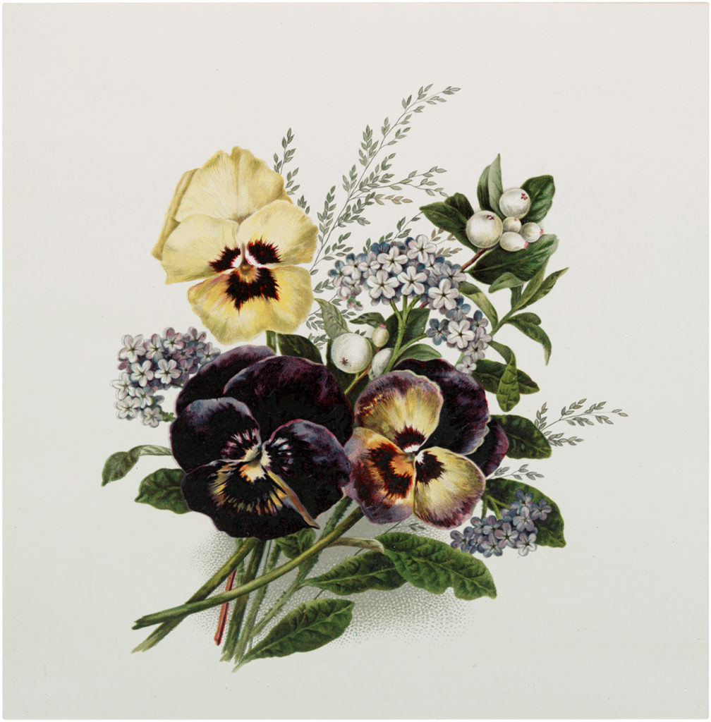 Pansy Bouquet Image