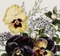 Antique Pansy Bouquet Image!