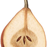 Vintage Pear Sliced Image