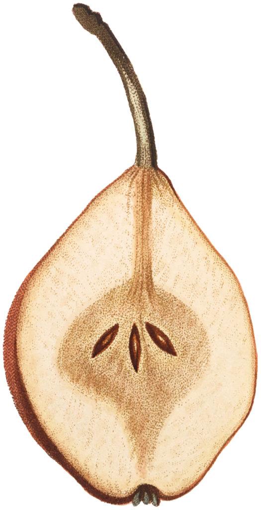 Vintage Pear Sliced Image