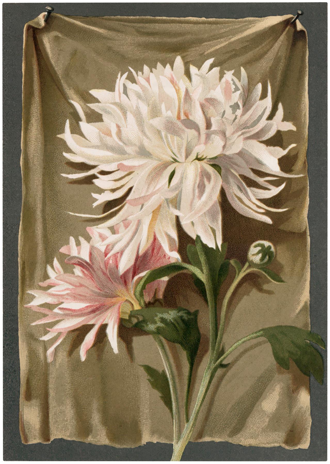 Vintage Pink White Mums Image