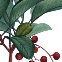 antique-berry-branch-thm-graphicsfairy