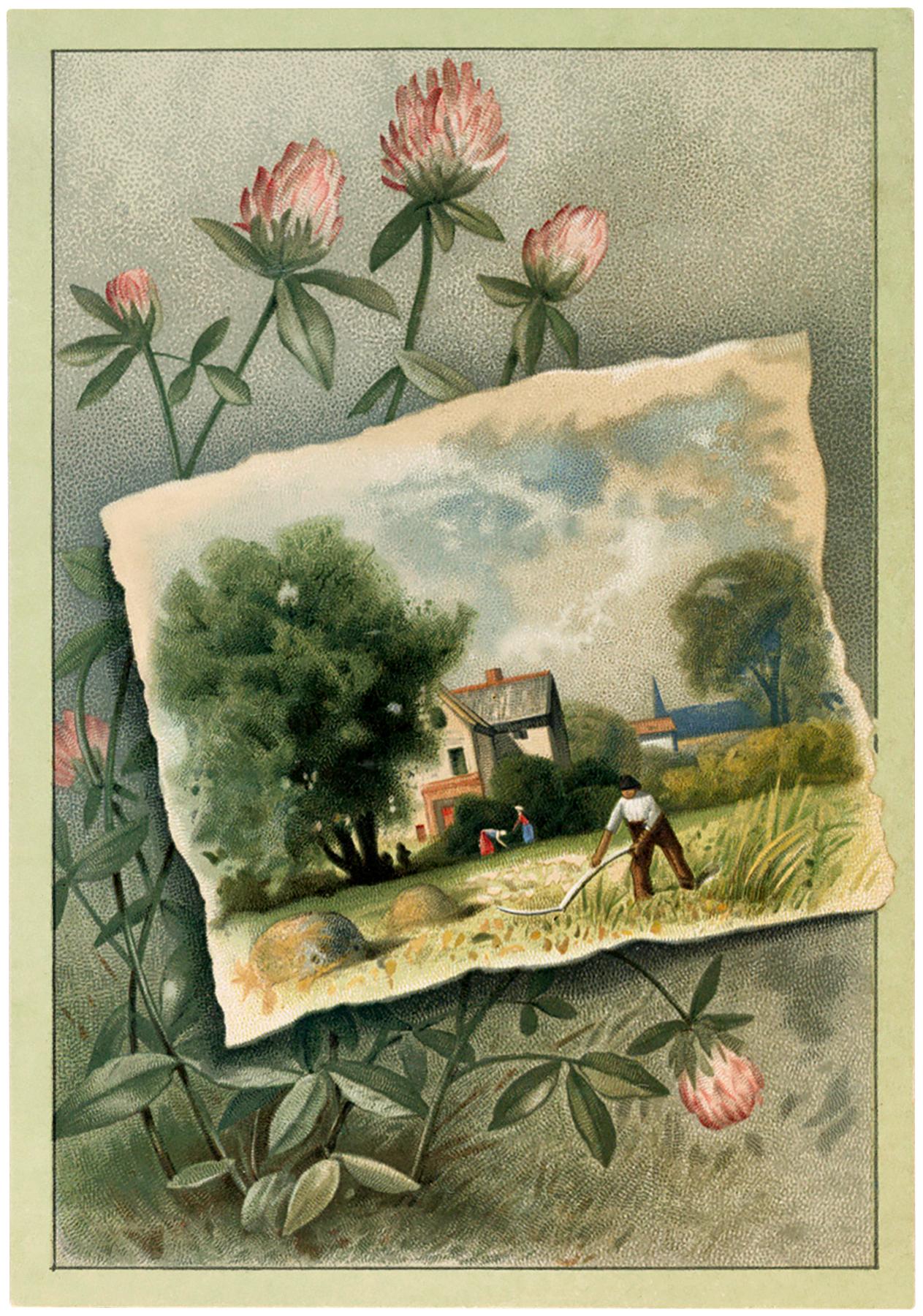 Pink Clover Landscape Image