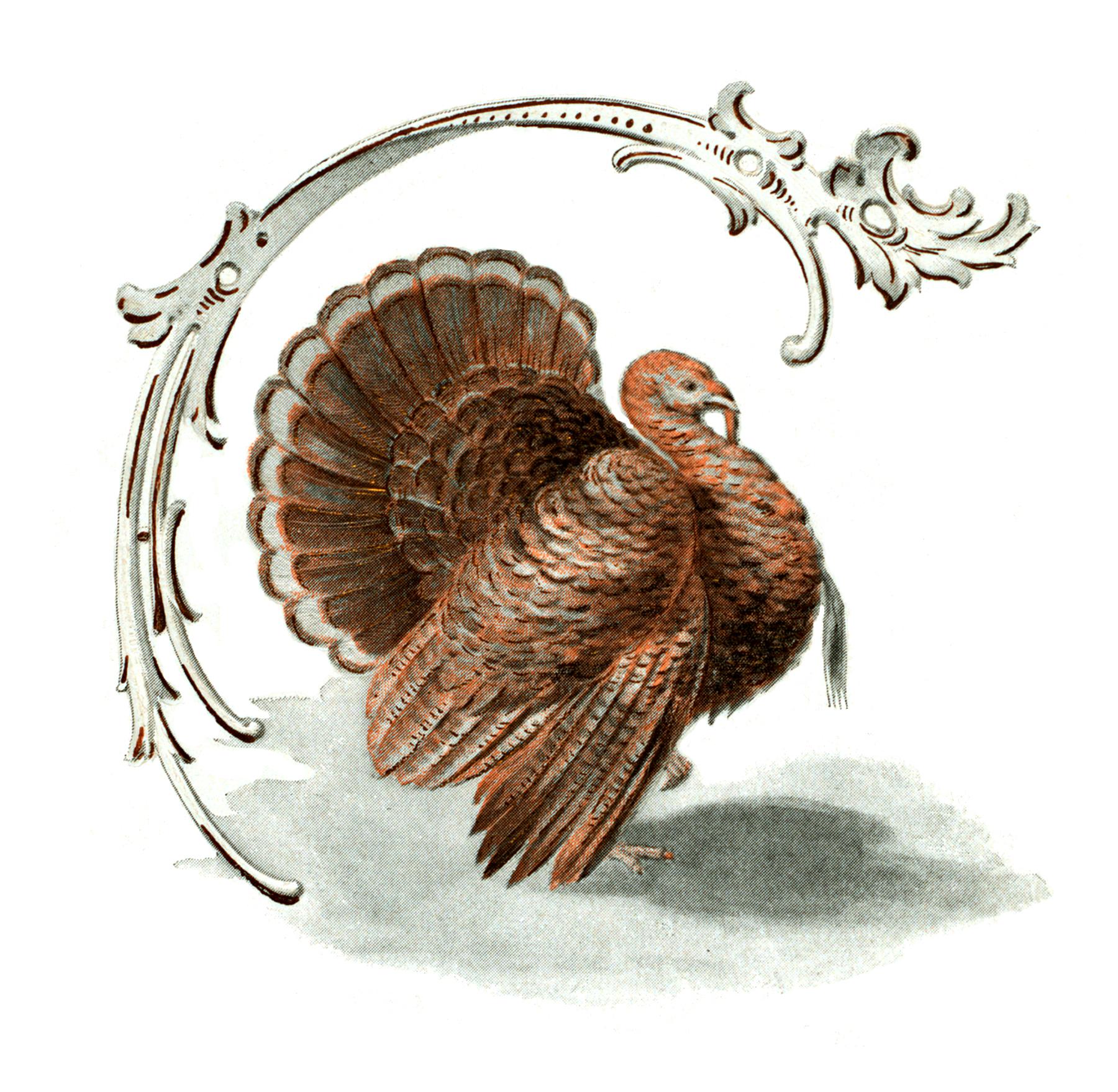 Public Domain Turkey Image