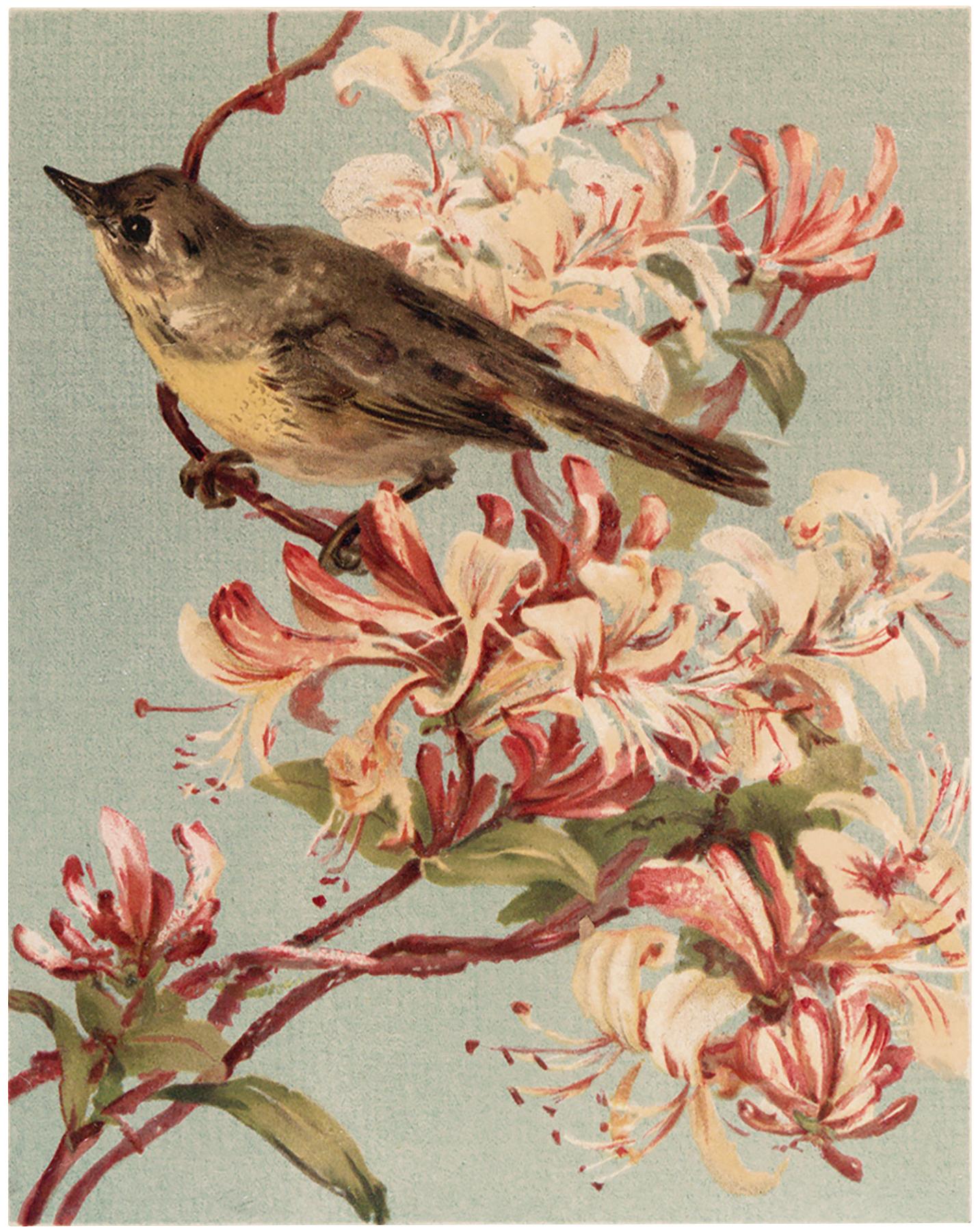 Vintage Bird Pink Flowers Image