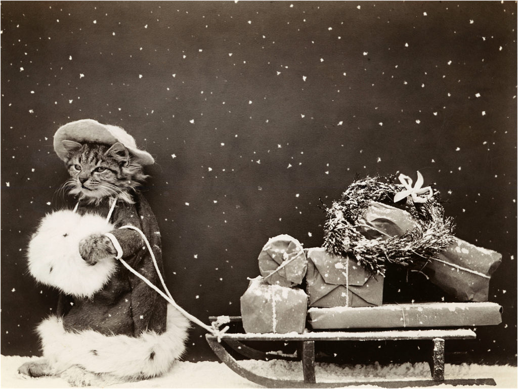 Vintage Christmas Kitty Photo