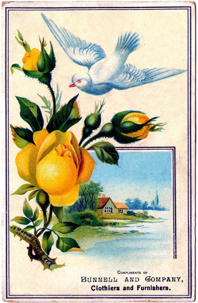 Yellow Roses Dove Picture