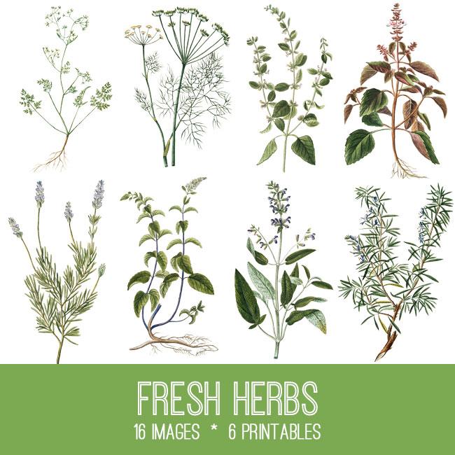 Herbs Image Kit