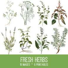 Herbs Image Kit – Graphics Fairy Premium Membership