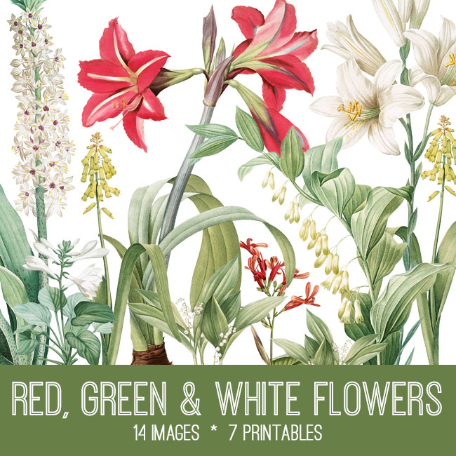 Red Green White Flowers