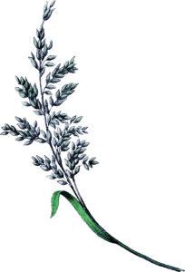 Vintage Botanical Grain Image