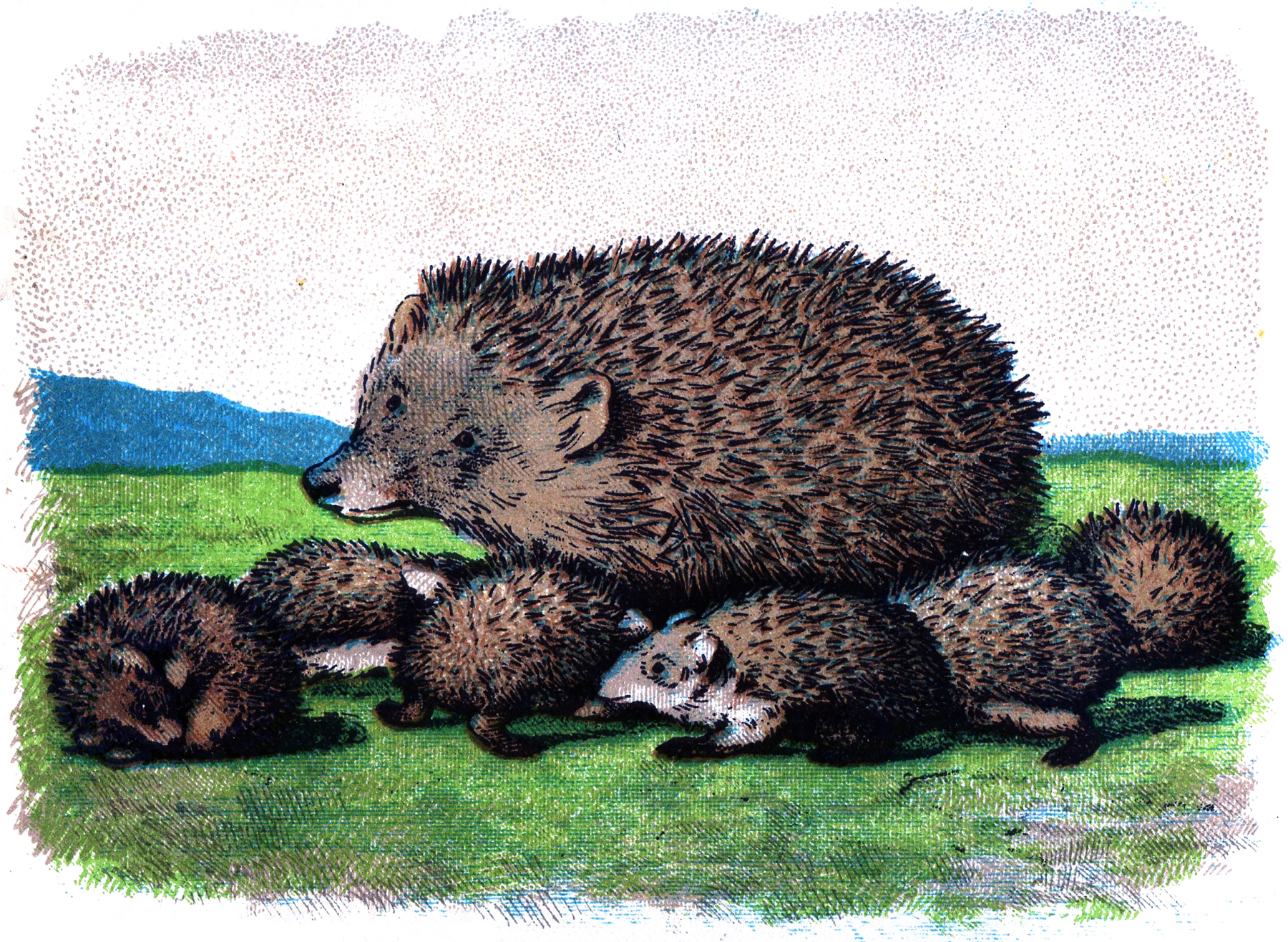 Free Vintage Hedgehog Picture