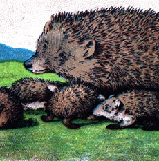 Free Vintage Hedgehog Picture – with Babies!