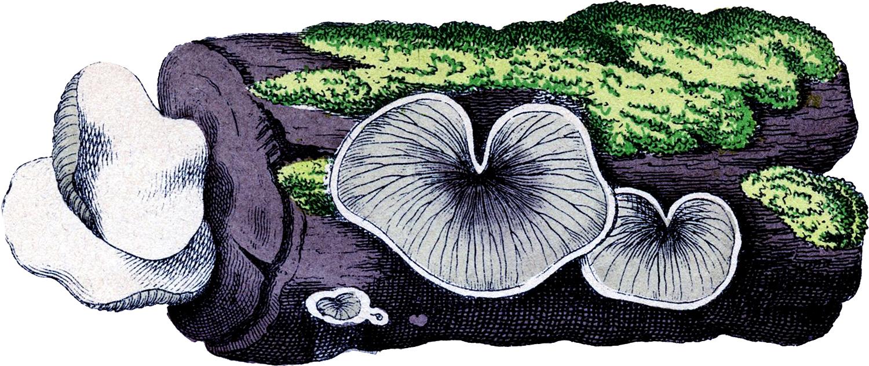 Vintage Moss Log Image