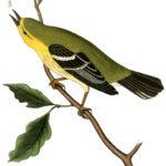 Vintage Yellow Bird Download